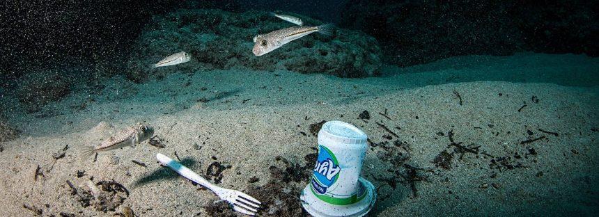 Más especies invasoras por culpa del plástico en el mar
