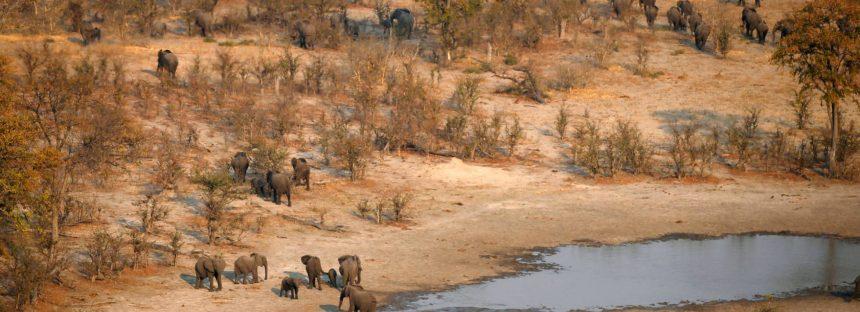 Botsuana levanta la prohibición de cazar elefantes