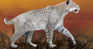 El tigre dientes de cimitarra habitó tierras mexicanas