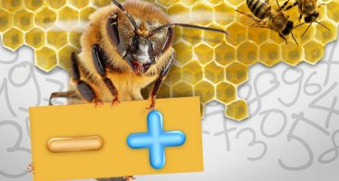 Existen abejas con capacidad para realizar operaciones aritméticas