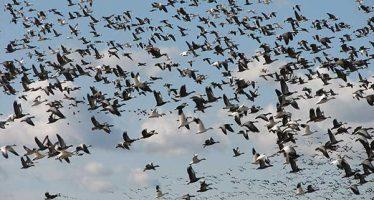 La migración, fundamental para las aves y para el equilibrio ecológico