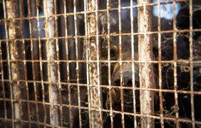 """El dueño de un zoo de Canadá, detenido por """"crueldad y negligencia animal"""""""