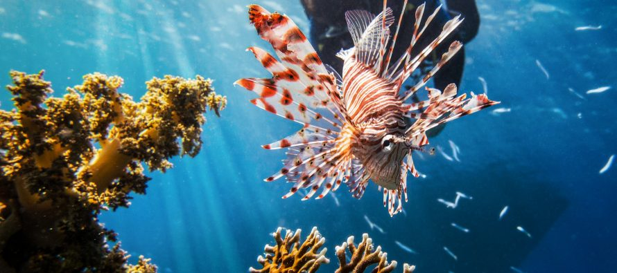 El impacto del 94% de las especies exóticas marinas se desconoce
