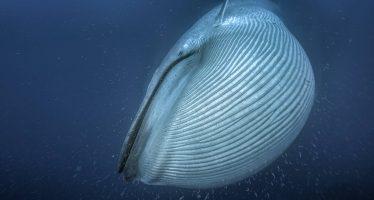 La amenaza de extinción masiva de especies engloba a los recónditos parajes del Océano Austral y la Antártida