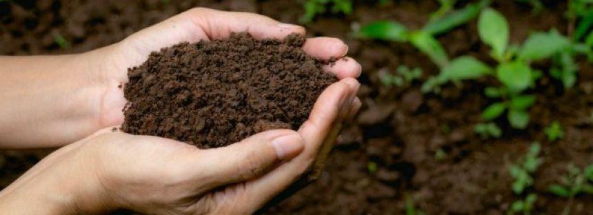 La revolucionaria ley que permite convertir los cadáveres humanos en abono para jardines