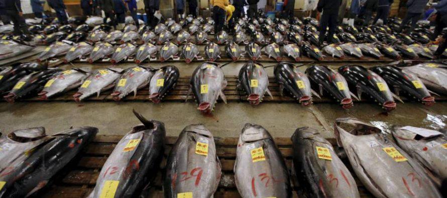 La sexta gran extinción de especies amenaza también la economía global
