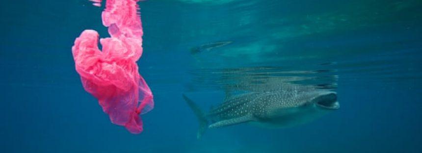 Un estudio advierte que los plásticos de un solo uso representan un grave peligro para el cambio climático