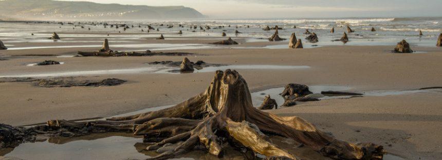 Una fuerte tormenta hace reaparecer un bosque prehistórico de hace 4.500 años en el Reino Unido