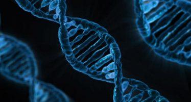 La reescritura de los genes podría tener amplias consecuencias en la naturaleza