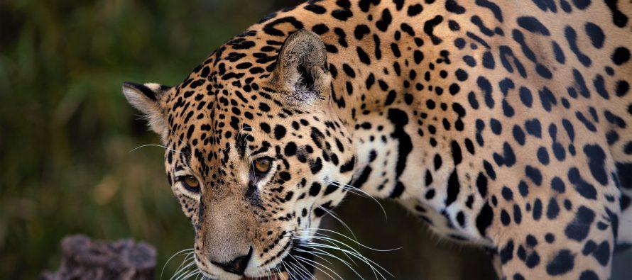 Un millón de especies en peligro de extinción por 300 toneladas de contaminantes