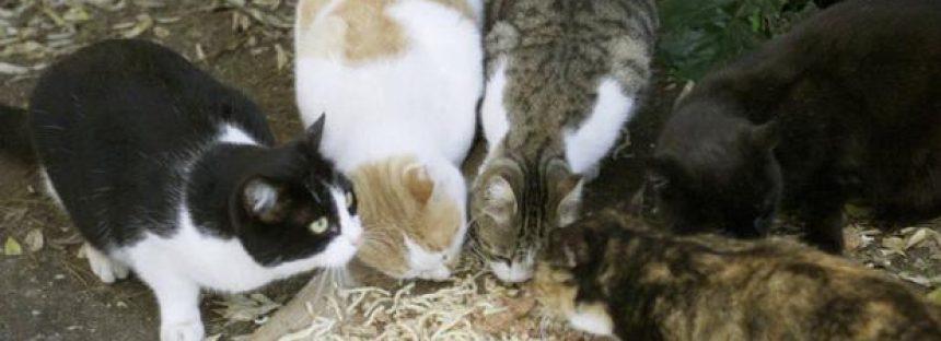 La proliferación de los gatos en Jerusalén, un quebradero de cabeza para el Ayuntamiento