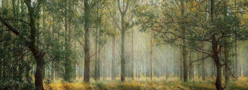 Los árboles cada vez crecen más rápido y mueren antes