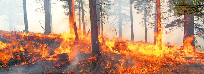 Situación de incendios forestales al 23 de mayo: 11:00 horas