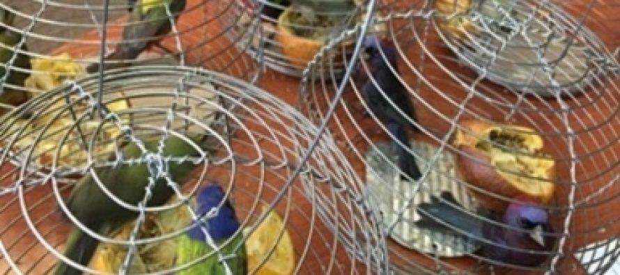 Se han decomisado cerca de 11 mil productos de vida silvestre en lo que va del año