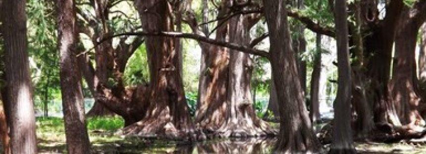 Programa de Manejo para el Parque Nacional El Sabinal