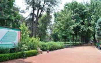 Suspenden donación de árboles hasta el mes de julio