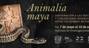 Diplomado Animalia Maya