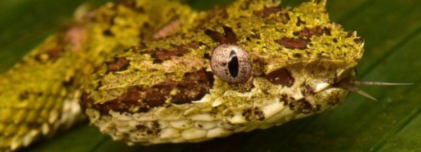 """Los animales que se creían extintos hallados en la """"Ciudad perdida del Dios Mono"""" en Honduras (y uno que podría ser una especie nunca antes vista)"""