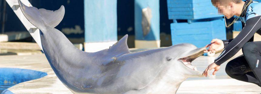 Los delfines del zoo de Madrid, bajo la sombra del maltrato