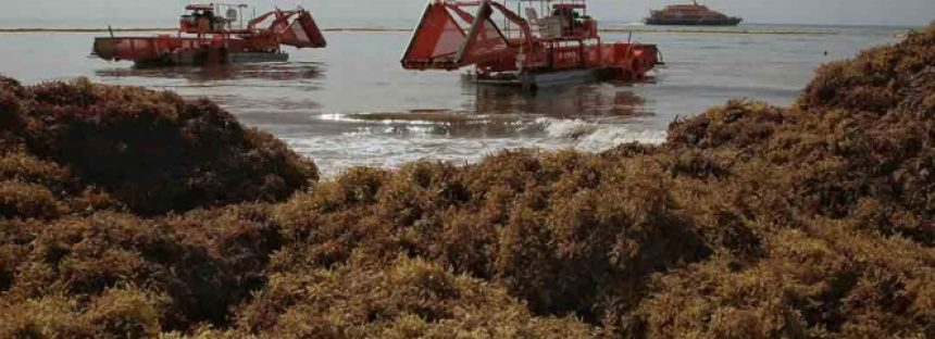 Polvo del Sahara, culpable del aumento del sargazo: científicos