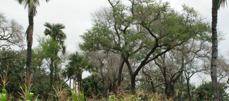 Nueva licenciatura de Ciencias Agroforestales en la UNAM