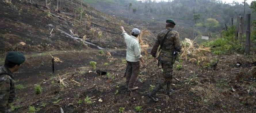 """¿Quiénes son los """"narcoganaderos"""" que han incendiado miles de hectáreas de bosques en Guatemala?"""