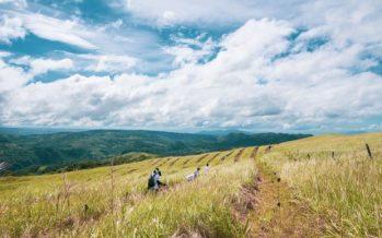 Filipinas aprueba una ley que obliga a los estudiantes a plantar 10 árboles si quieren graduarse