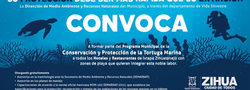 Programa municipal de la conservación y protección de la tortuga marina