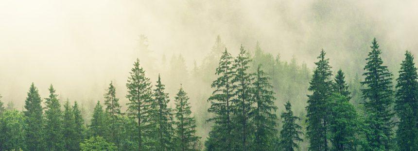 Bruselas estudia restringir las importaciones de productos que generen deforestación