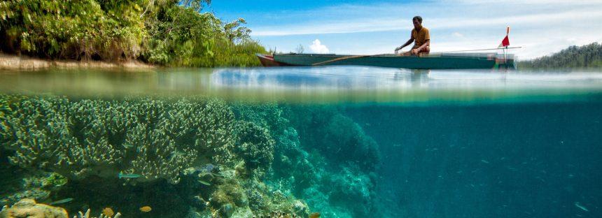 Detectan unos corales que eligen comer plástico antes que su alimento natural