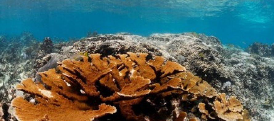 Quintana Roo asegura sus arrecifes y playas contra huracanes