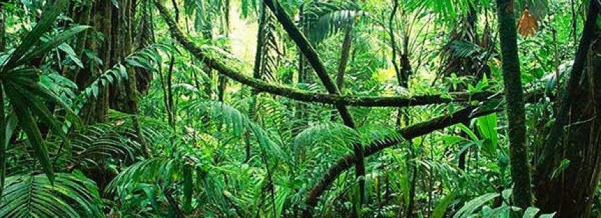 Por deforestación, México ha perdido 70 % de sus selvas y el problema se agudiza