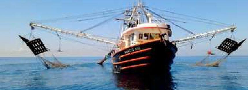 Detectan actos de corrupción oficial en el sector acuícola y pesquero, en el gobierno de Enrique Peña Nieto