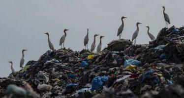 """""""Crisis mundial de la basura"""": 3 cifras impactantes sobre el rol de Estados Unidos"""
