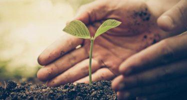 Cambio climático: ¿esta solución natural es la más efectiva para combatir el calentamiento global?