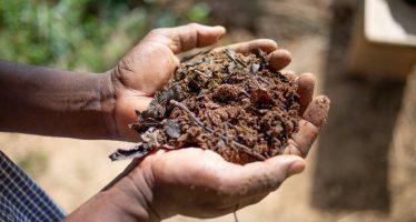 Con estas cinco claves y 13 principios se intenta construir un sistema agroecológico mundial