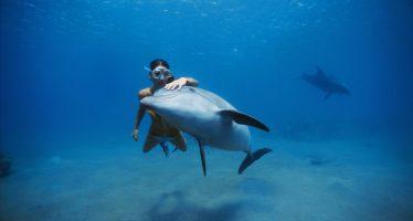 La clave de por qué un delfín vive 17 años y un humano 90
