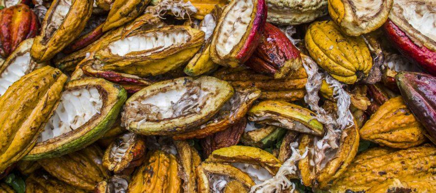 La barra de chocolate 'blockchain' que fomenta el desarrollo en Ecuador