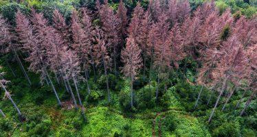 """Bruselas acelera su agenda verde para importar solo productos """"libres de deforestación"""""""