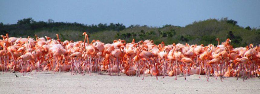 Se informa al público en general, que la Secretaría de Medio Ambiente, Recursos Naturales y Pesca, ha concluido la elaboración del Programa de Manejo del Area Natural Protegida con el carácter de Reserva de la Biosfera la región conocida como Ría Lagartos