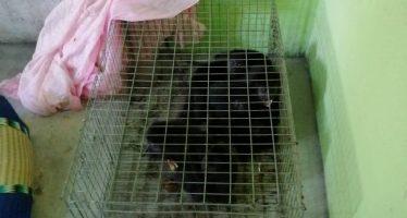 51 ejemplares de vida silvestre encontrados en un domicilio particular en Chiapas