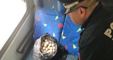 267 huevos de tortuga son asegurados en operativo carretero