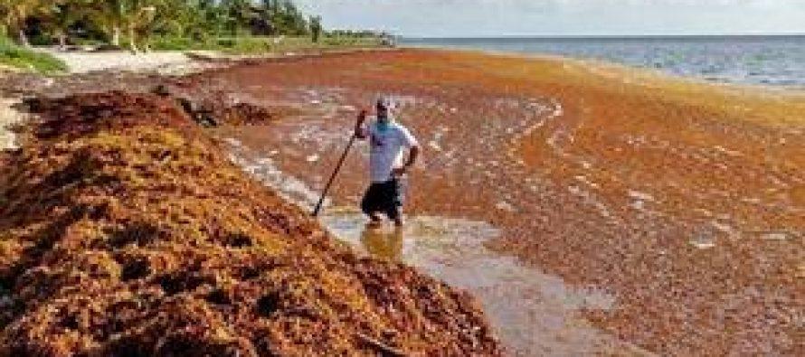 Los satélites de la NASA encuentran el mayor florecimiento de algas en el mundo