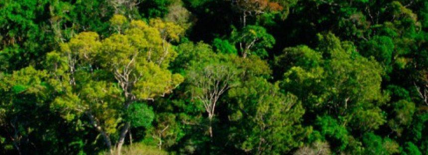 WWF se une a esfuerzo latinoamericano para restaurar los bosques