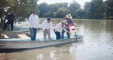 Inicia en Sinaloa un programa piloto de repoblamiento de camarón