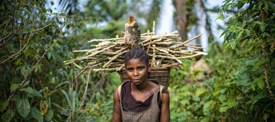 ¿Dónde es más viable, duradera y beneficiosa la restauración de los bosques?
