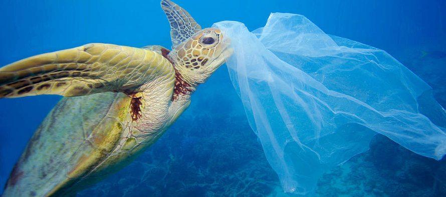 4 animales que sufren por la contaminación plástica