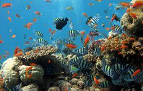 ¿Qué está matando, realmente, a los arrecifes de coral?