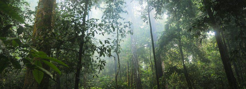 Los árboles fundamentales para la vida en el planeta