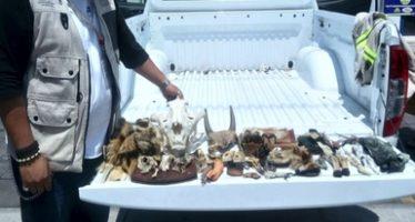 114 partes y derivados de fauna silvestre fueron confiscados en tianguis de la Ciudad de México
